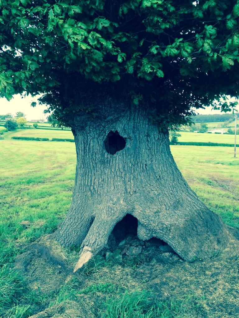 Oak Tree Lyn
